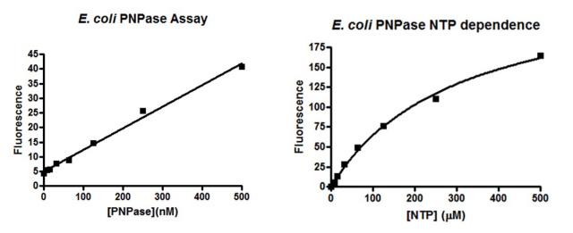 the e  coli polynucleotide phosphorylase (pnpase) assay kit (catalog no   pnp100k) includes 400 µl of 10 x buffer, 33 µl of 100 x template,